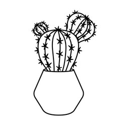 cactus and succulent line style vector image
