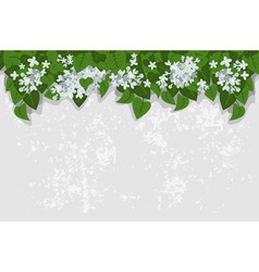 Grunge background with white lilacs detailed vecto vector