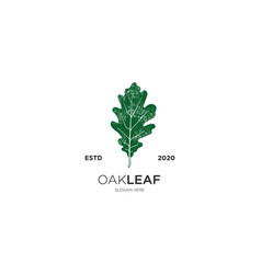 oak leaf grunge vector image