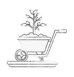 plant on wheelbarrow vector image