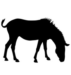 silhouette african zebra on a white background vector image
