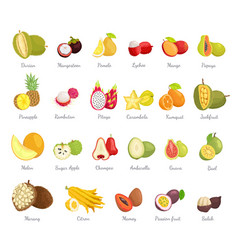 Sugar apple and guava set vector