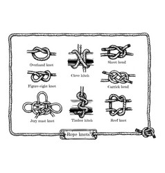 different rope knots vector image