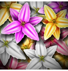 Background with colorful lilies vector image vector image