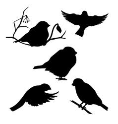 Bullfinch set vector image