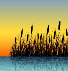 Reed silhouette with water reflection vector image vector image