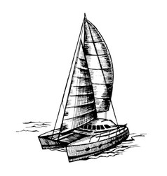 catamaran sailboat monochrome vector image vector image