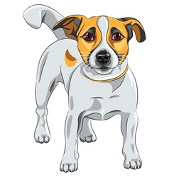dog Jack Russell Terrier vector image vector image
