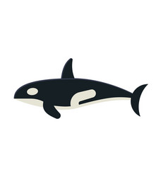 killer orca whale vector image vector image