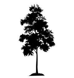 Acacia tree and grass silhouette vector