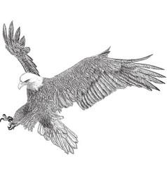 bald eagle swoop attack hand draw sketch black vector image