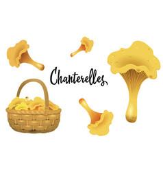 Wicker basket full of chanterelles and mushroom vector