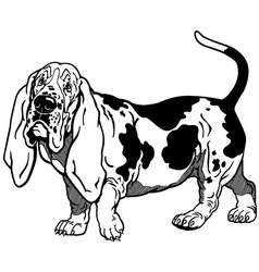 basset hound black white vector image vector image