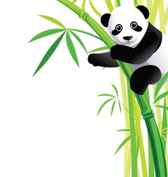 panda 041 vector image