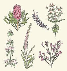 Hand drawn flower set vector image