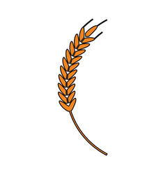 wheat ear icon image vector image