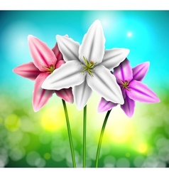 Natural background with lilies vector image