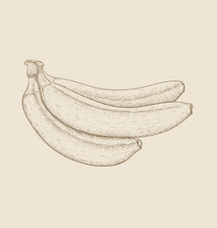 banana hand drawn sketch on beige background vector image