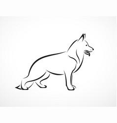 german shepherd dog on white background pet vector image