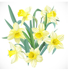 Lush yellow daffodils vector