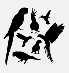 Parrot and hummingbird silhouettes vector image