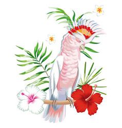 parrot ara with tropical plants and flowers white vector image