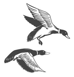 set of wild ducks icons isolated on white vector image