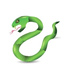 Cartoon green snakes vector