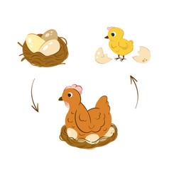 Chicken hatch stage neat vector