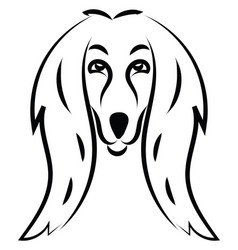 Cute afghan hound dog on white background vector