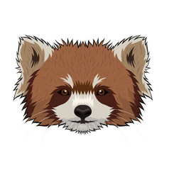 red panda head isolated on a white background vector image