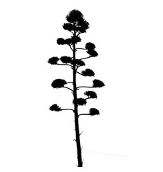 tree silhouette on white vector image