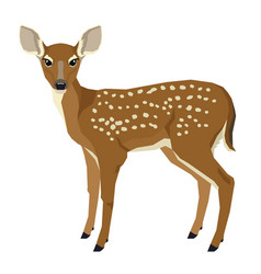 wild animal of a fawn isolated vector image