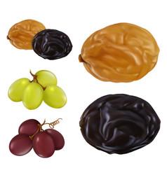 Raisin dried grape 3d realistic icon set vector