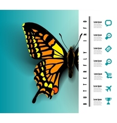 Realistic butterfly top view vector