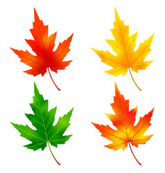 set of colorful maple tree leaf vector image