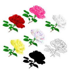 various red pink white yellow rose stem with vector image