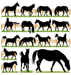 Set of 16 Horses Silhouettes vector image vector image