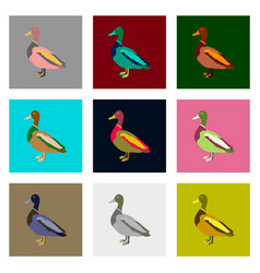 Set of in flat style wild duck vector