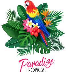 Tropical banner with toucan vector