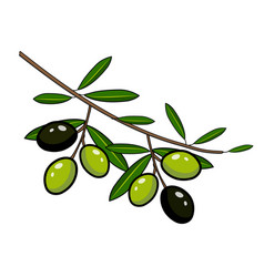black and green olives on a branch vector image