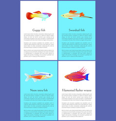 Colorful guppy and swordtail fishes posters vector