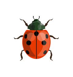 ladybug ladybird vector image