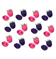 raspberry and blackberry pattern background vector image
