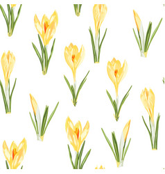 yellow crocuses flowers seamless pattern vector image