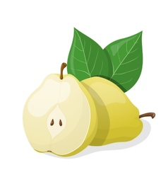 One pear and half of pear vector image vector image