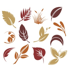 Collection colourful autumn leaves vector image