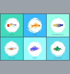 Neon tetra fish blue tamarin vector