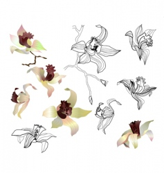 orchid branch set vector image