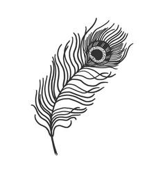Peacock feather sketch vector